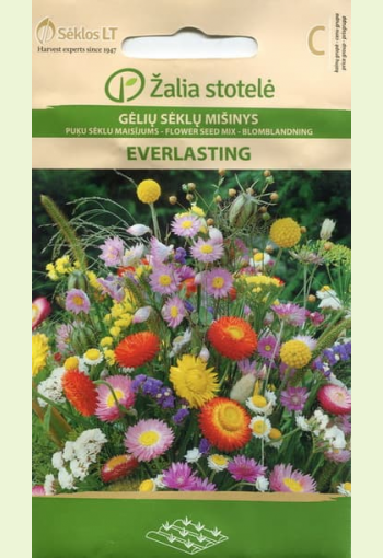 """Mix of hight annuals """"Everlasting"""""""
