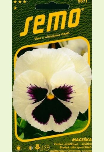 """Garden Pansy """"White with Violet"""""""