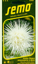 """Aster """"Electric White"""""""