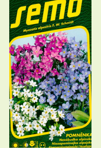 """Alpine """"Forget-Me-Not"""" (mix)"""