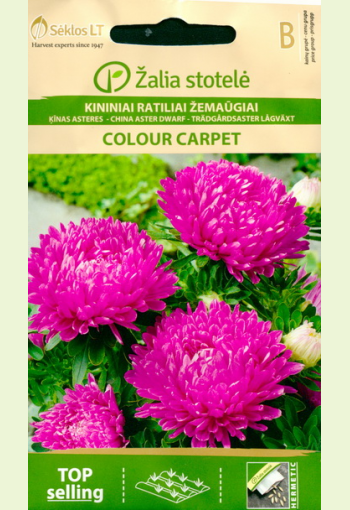 """Aster low-growing """"Colored carpet - pink"""""""