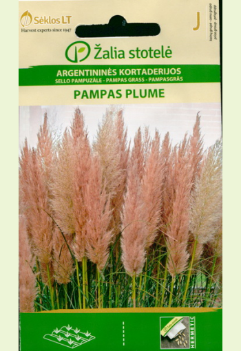 """Pampasgräs """"Feather Pink"""""""