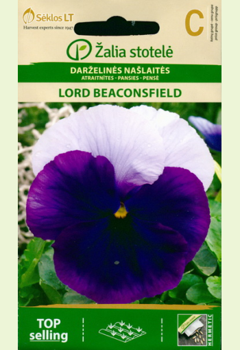 """Pansy """"Lord Beaconsfield"""""""
