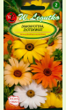 """African Daisy """"Pastel shades mix"""""""