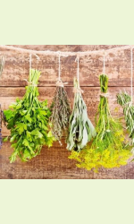 Spice herbs & Medical plants