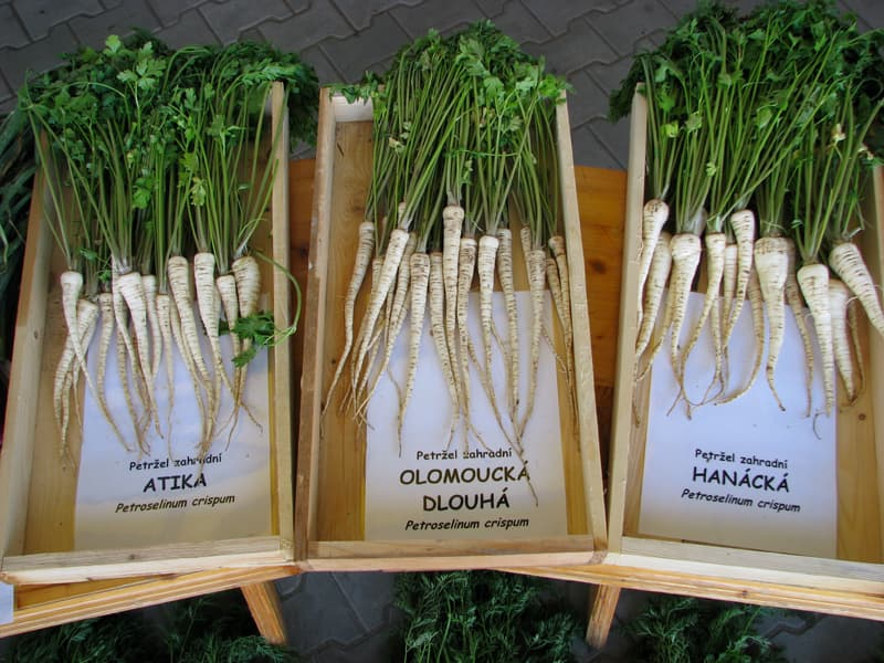 Root parsley Atika juurpetersell